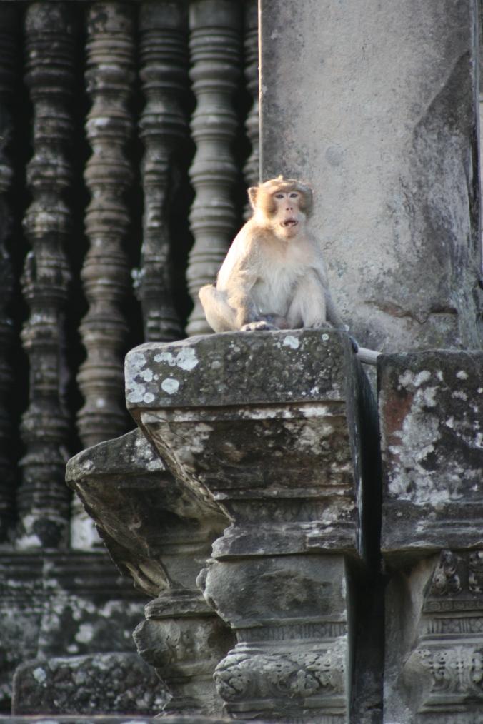 Cambodia 511
